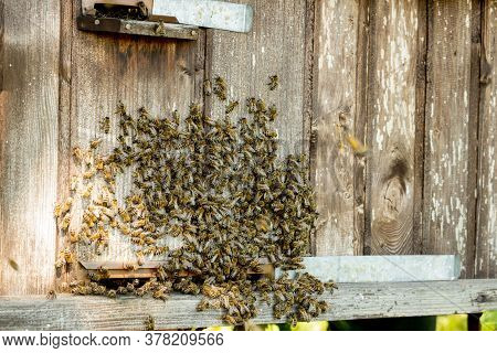 A Lot Of Bees Returning To Bee Hive And Entering Beehive With Collected Floral Nectar And Flower Pol