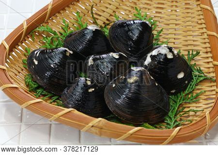 big size japanese basket clams on bamboo tray, food ingrediets