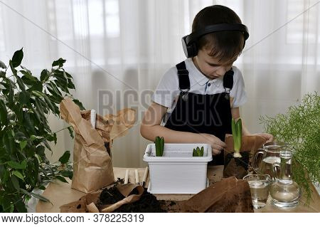 The Boy Is Engaged In The Planting. Carefully Palms Gently Releases The Last Hyacinth Bulb From The