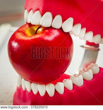 Dentures Biting An Apple. Funny Joke. Medical Background.