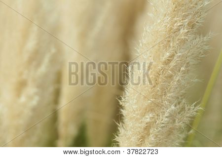 Crema Color Fluffy Plants