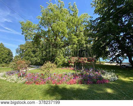 Landscape Of The Flower Island Mainau On The Lake Constance Or Landschaft Der Blumeninsel Im Bodense