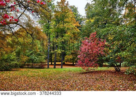 Autumn park with yellow trees and fallen leaves picturesque forest landscape.