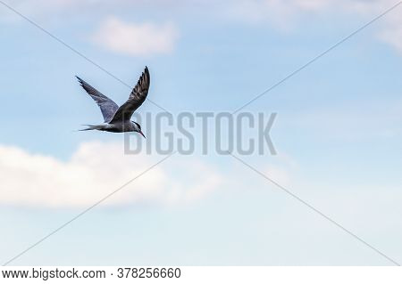 A Seagull In The Blue Clouds Of The Sky. A Lone Seagull Flying In The Sky As A Background