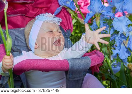 Baby Screams In Flowers, Crying Baby Screaming While Sitting In A Stroller In A Flower Garden