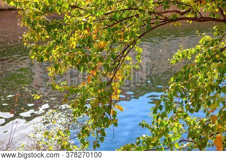 Hanging Autumnal Branches Over The Water . Scenery With Autumn Leaves