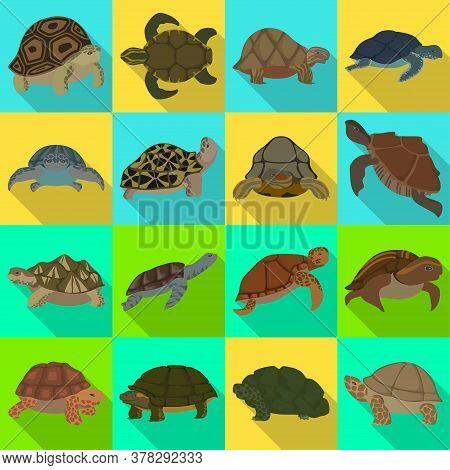 Sea Turtle Vector Illustration On White Background .tortoise Of Animal Vector Flat Set Icon. Isolate