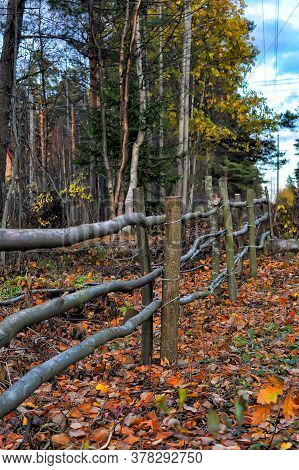 Footpath With Wooden Fence In The Forest