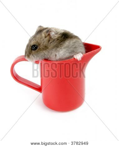 isolated red plastic cup with grey hamster poster