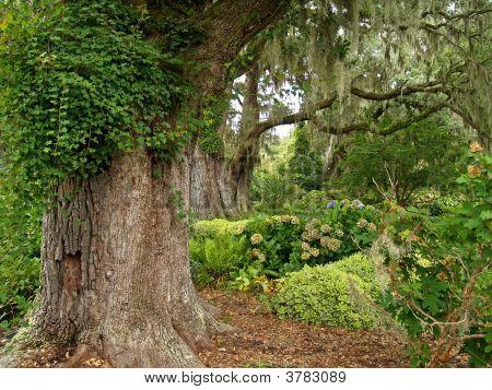 Live Oaks Garden