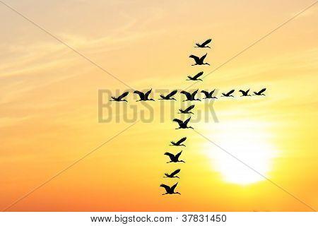 Bela & celeste céu à noite com aves formando Santa Cruz forma como eles voam juntos em