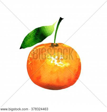 Ripe Orange Tangerine Or Clementine With Green Leaf, Closeup, Citrus Fruit Isolated, Hand Drawn Wate