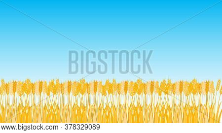 Wheat Field, Wheat Against The Blue Sky. Vector Illustration. Vector.