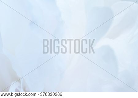 Abstract White Flowers Background. Close Up Image Of White Peony Petals. Macro Of Petals Texture. So