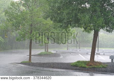 Parking Lots And Trees In The Heavy Rain In Summer Thunderstorm