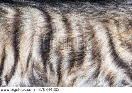 Closeup Real Hyena Skin Texture. Fur Background Texture Image Background