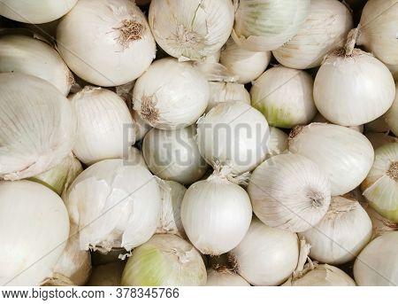 Pile Of White Onion In Harvest Season