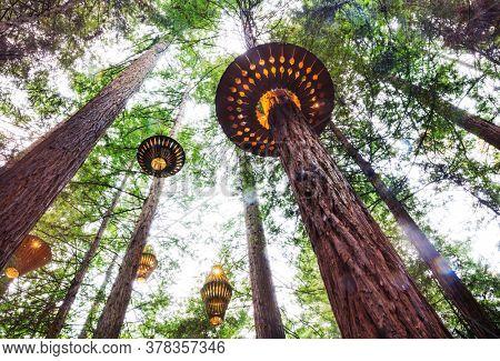 Wooden lamp in Redwoods Whakarewarewa forest in Rotorua, New Zealand