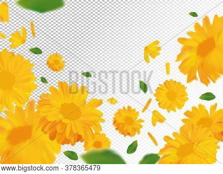 3d Realistic Marigold With Green Leaf. Yellow Calendula Flower In Motion. Beautiful Marigold Backgro