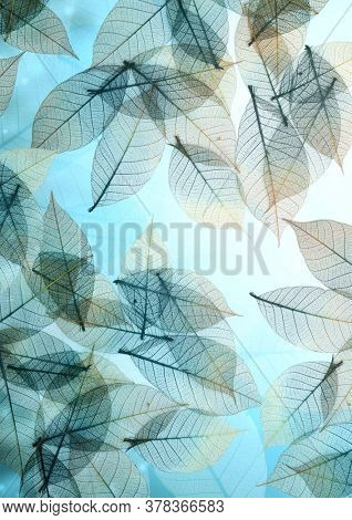 Horizontal or vertical nature background with transparent skeleton leaves. Natural eco backdrop. Mock up template. Copy space for text