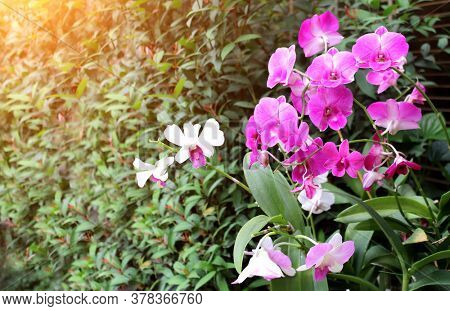 Orchid flowers on sunny beautiful nature background. Horizontal banner with leaves of tropical plants and flower. Copy space for text