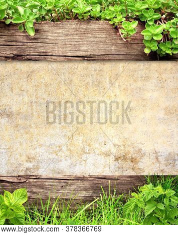 Summer background with old wooden plank, stucco texture, grass and green leaves. Vertical nature backdrop. Mock up template. Copy space for text