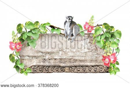 Ringtailed lemur, old stone, lianas, flower and leaves of tropical plant. Jungle stone sign with liana branches and lemur catta. Isolated on white background. Mock up template. Copy space for text