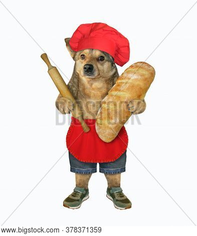 The Beige Dog Baker In A Red Chef Hat And Apron Is Holding A Big Loaf Of  White Bread And A Wooden R