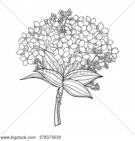 Vector Bouquet With Outline Forget Me Not Or Myosotis Flower Bunch, Bud And Leaf In Black Isolated O