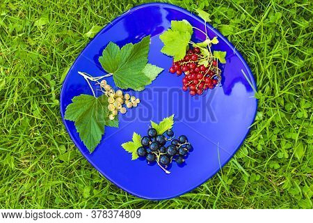 Set, Creative Composition Of Different Types Of Currants. Branch With Leaves Of Red Currant, Black A