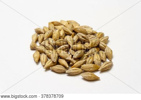 Barley Malt On A White Background. Heap Of Cereal Grains Isolated Close Up. Seeds Of Barley, Wheat,