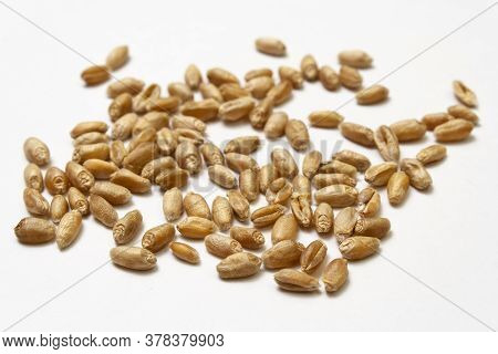 Wheat Grains On White Isolated Background. Pile Of Cereal Grains Scattered On The Table Close-up. Se