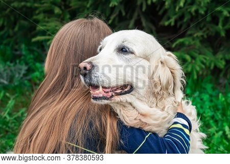 A Golden Retriever In The Arms Of Its Owner. A Girl Hugs Her Dog. The Concept Of Friendship Between
