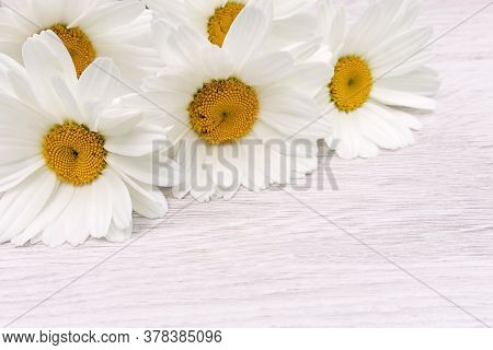 A Delicate Floral Arrangement Of White Daisies On A Hard Surface For Design, Congratulations And Dec