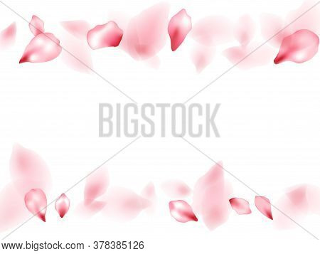 Apple Flower Flying Petals Isolated On White. Realistic Beauty Salon Background. Japanese Sakura Pet