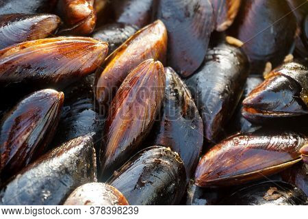 Many Of The Shells Of Mussels Tray. Mussels Close Up