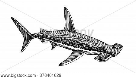 Swimming Hammerhead Shark, Dangerous Sea Predator, Fish, For Logo Or Emblem, Vector Illustration Wit
