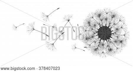 Dandelion Background For Your Design. The Wind Blows Dandelion Seeds. Floral Background. Brochure Cr