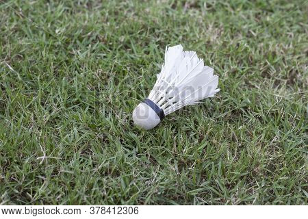 White Feather Shuttlecock Is Used For Playing Badminton On A Grass Field.