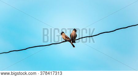 Two Red Whiskered Bulbul Bird On Electric Line With Blue Sky Background