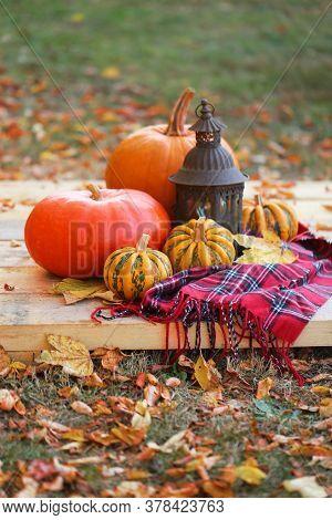 Thanksgiving Day. Autumn Pumpkin Harvest.set Of Pumpkins, Checkered Scarf, Iron Old Lantern On A Woo