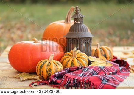 Thanksgiving Day. Autumn Pumpkin Harvest.set Of Pumpkins, Checkered Scarf, Iron Lantern On A Wooden