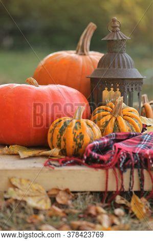 Thanksgiving Day. Autumn Pumpkin Harvest.set Of Pumpkins, Checkered Scarf, Old Lantern On A Wooden T