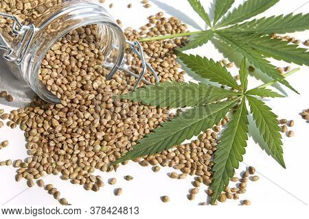 Hemp Products Concept. Seeds Cannabis And Green Plant Isolated On White Background