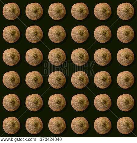 Autumn Squared Seamless Pattern - Round Melons On Dark Green Background. This Late Melon Variety - U