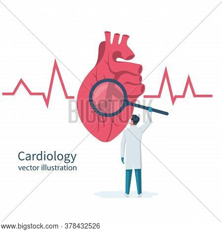 Cardiology Concept. Cardiologist Doctor Holds Magnifying Glass In Hands, Looks To Big Human Heart. R