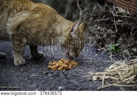 Abandoned Cat Eating