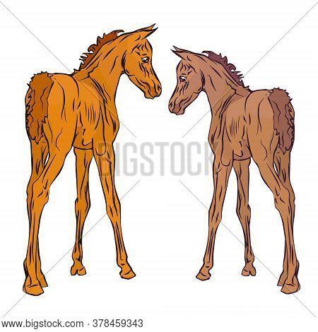 Isolated Monochrome Drawn Image Of Two Red Foals Of The Arabian Horse Breed On A White Background.