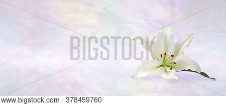 Funeral Wake Order Of Service Lily Banner Background - White Lily Head Against A Subtle Angelic Ethe