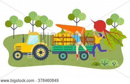 Young Girls Farmers Putting Big Vegetables Inside Cart Of Tractor, Farming Crop, Fresh, Organic. Loa